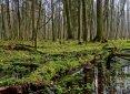 Wiosna w Puszczy Białowieskiej. Fot. archiwum PROT